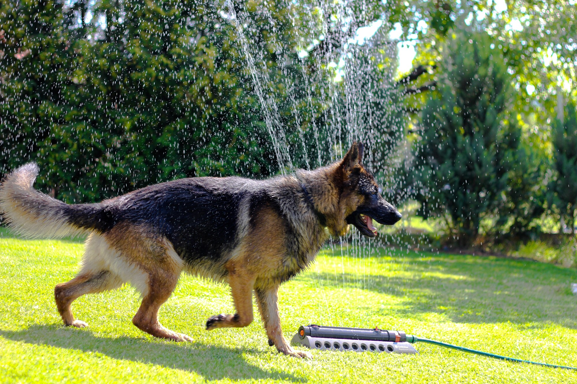 joint pain relief for dogs